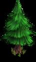 TreePine 01 Grw 01