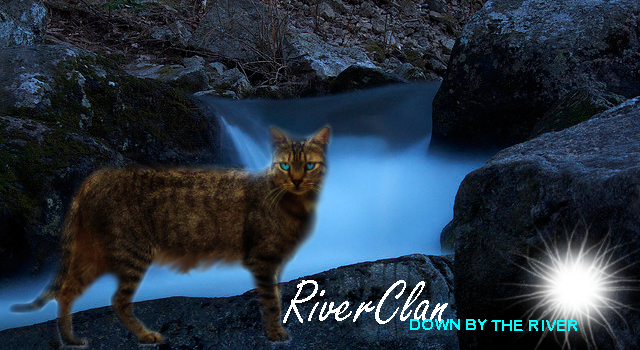 Riverclan down by the river by yewtail yewstar-d360q6f