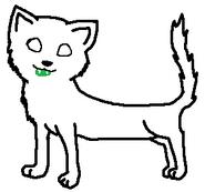 Med. Cat, Long, Male