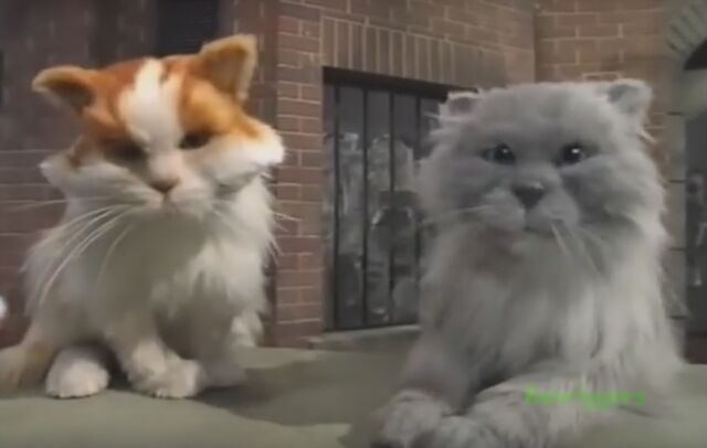 File:BBC Cats eyes Jimmy and Juke.jpg