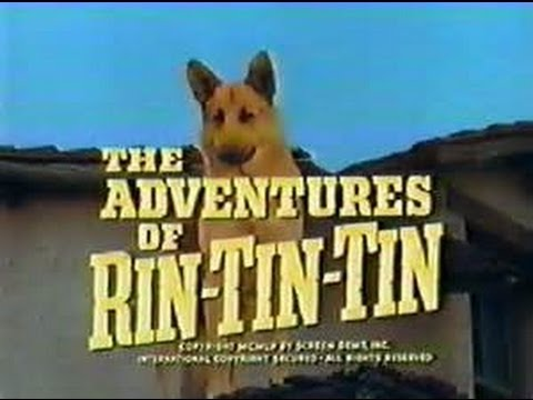 File:Adventures of rin tin tin.jpg