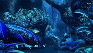 Bioluminescence Nighty Time