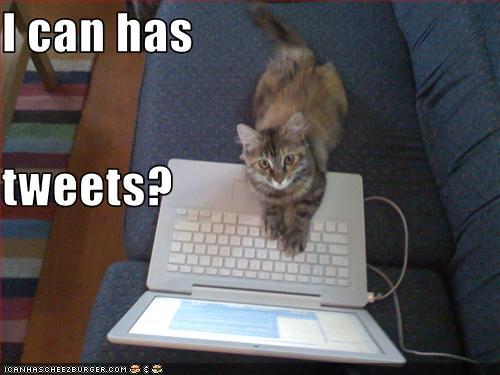 File:Lolcat-i-can-has-tweets.jpeg