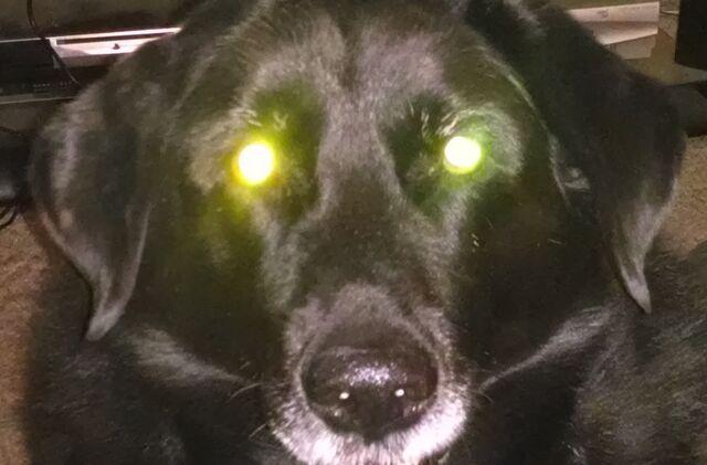 File:Laserdog.jpg