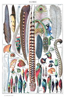 Types de plumes. - Larousse pour tous, -1907-1910-