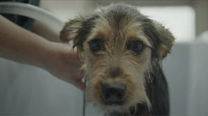 File:Buzz, Pedigree Adoption Drive NZ..jpg