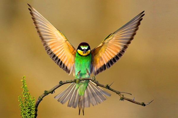 File:Beautiful-Birds2-1-.jpg