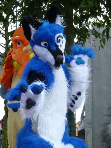 File:Blue fursuit by paulsky1-d3hrect.jpg