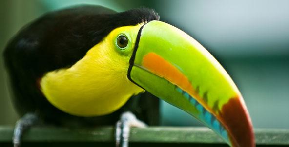 File:Bird4.jpg
