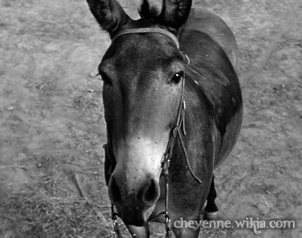File:Mule-thelongwinter.jpg