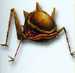 File:Gerridae.png