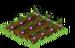 Turnips Seedling