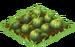 Jack-o-Lantern Seedling