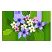Purple Bloom-icon
