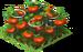 Organic Tomatoes Fruit