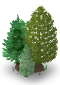 Pine Tree-SW