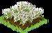 Edelweiss Fruit