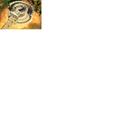 Aristotle's Lyceum (CTP2)