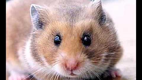 CREEPYPASTA- My Hamster