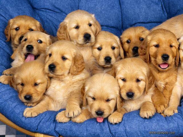File:Aaaaaawwwwwwwwww-Sweet-puppies-9415255-1600-1200.jpg