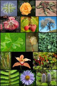 File:Plantae.png