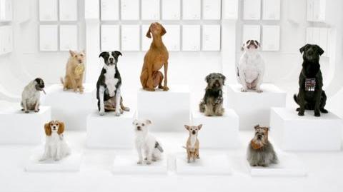 The Bark Side 2012 Volkswagen Game Day Commercial Teaser