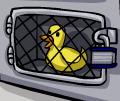 Rubber Duck inside case
