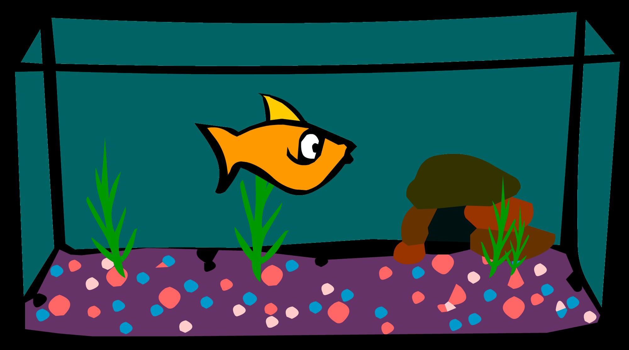 Fish aquarium wiki - Fish Aquarium Wiki