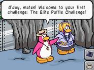 Elite puffle challenge