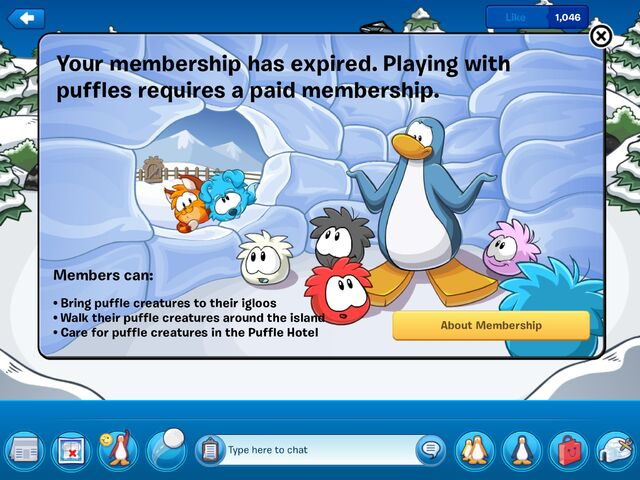 File:App Puffles Paid Member.jpg