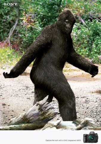 File:Bigfoot-tastic!.jpg