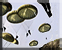 File:Gen1 Paradrop 3 Icons.png