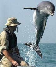 Catherbydolphin.jpg