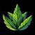 Herblore detail