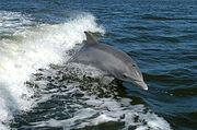 Waterdolphin.jpg