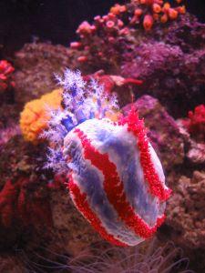 File:272256 patriotic sea creature.jpg