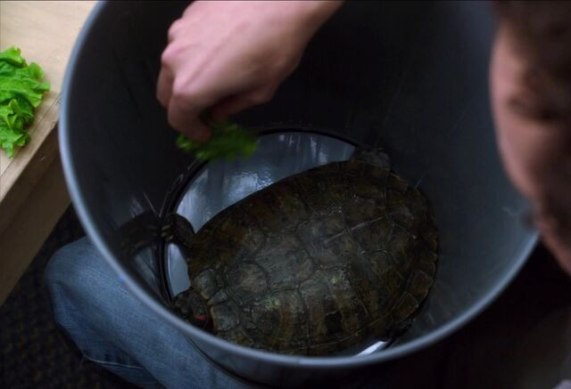 File:Turtle at home.jpg