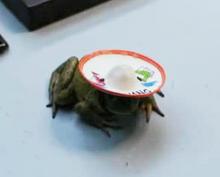 Changfrog