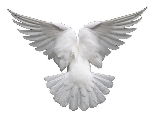 File:Dove.png