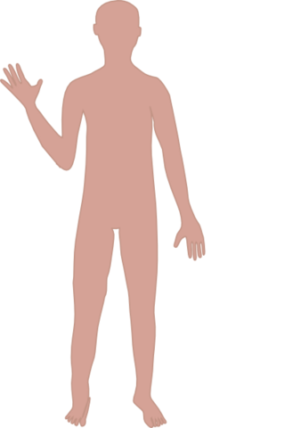 File:Body.png