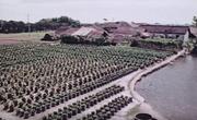Mukden collective farm