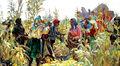 The Farmers of Turkey.jpg