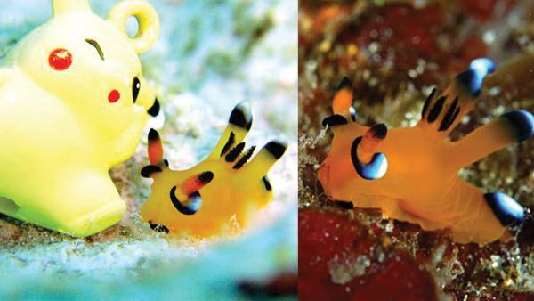 File:Pokemon-sea-slug.jpg