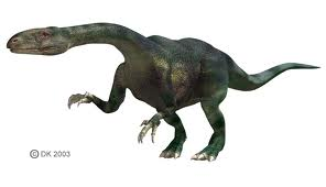 File:Thecodont.jpg