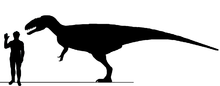 File:220px-Eocarcharia Sil3.png