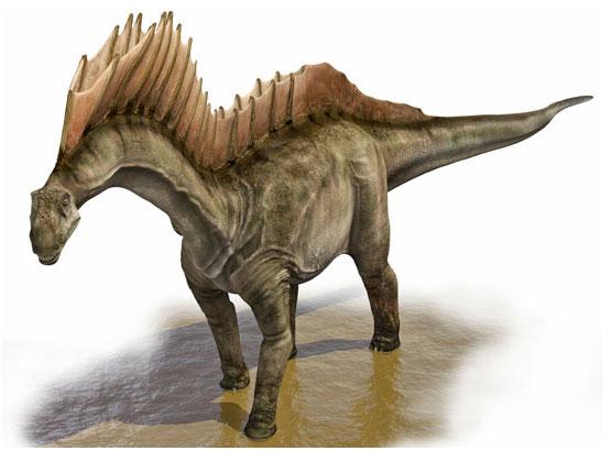 File:AMARGASAURUS-foto-dinosauro.jpg