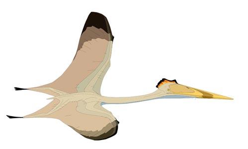File:Hatzegopteryx2.jpg
