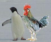 Artic Cocks parents