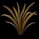 Grass Tall Savannah