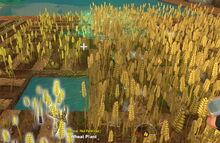 Creativerse Wheat ripening39